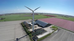 Aerial close by farm near colorful pink tulip field and wind turbine and farm 4k Stock Footage
