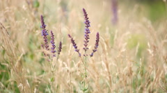 Grass flower background in nature - stock footage