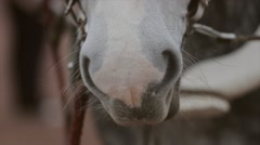 Mouth and eyes of light grey beautiful horse in bridle on street. Harness Stock Footage