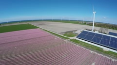 Aerial flying towards farm over colorful pink tulip field 4k Stock Footage