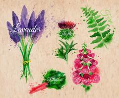 Flower grass lavender, thistle, foxgloves, kraft - stock illustration