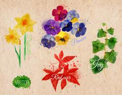 Flower grass daffodils, pansies, ivy, kraft - stock illustration