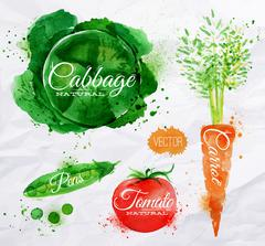 Vegetables watercolor cabbage, carrot, tomato - stock illustration