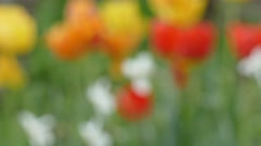 Blured abstract flower background Stock Footage