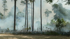 4K Florida Park Service Prescribed Burn Stock Footage