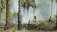 4K Florida Park Service Use Drip Torch for Prescribed Burn Stock Footage