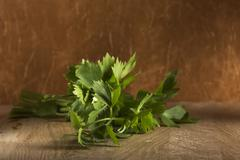 Fresh green aromatic lovage Stock Photos