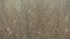 Tree under the snowfall in spring - stock footage