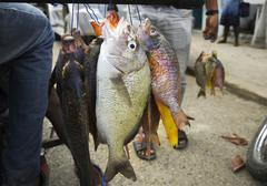 Fresh raw Fish. - stock photo