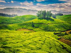 Green tea plantations in India Stock Photos