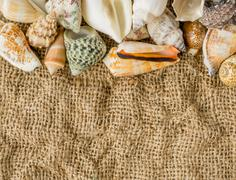 Seashells on fabric linen fabric background. Top view Stock Photos