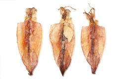 dried squid - stock photo