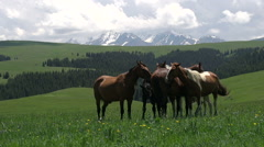 Herd in the Picturesque Foothills HD - stock footage
