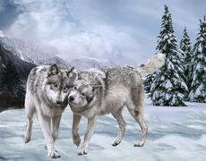 Couple of happy wolfs Against mountains and the wood . Winter Piirros