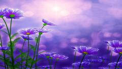 Beautiful flowers made with color filters. Violet background Stock Illustration