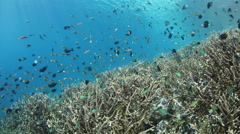 Reef Fish and Corals Stock Footage