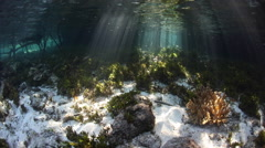 Blue Water Mangrove Forest and Beams of Sunlight Stock Footage