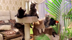 Kittens rotate synchronously head Stock Footage