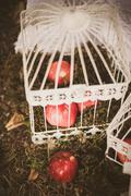 Festively decorated white birdcages and red apples on ground Stock Photos