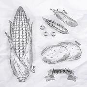 Vegetables corn, peas, potatoes vintage - stock illustration