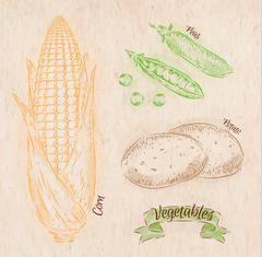 Vegetables corn, peas, potatoes country - stock illustration