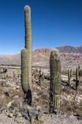 Colorful valley of Quebrada de Humahuaca, central Andes Altiplano, Argentina Stock Photos