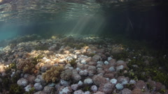 Corals Growing on Edge of Mangrove Forest Stock Footage
