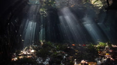 Sunbeams in Mangrove Forest Stock Footage