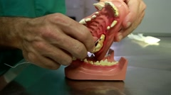 Veterinarian explains dental care for dog on plastic model of a dog's mouth Stock Footage