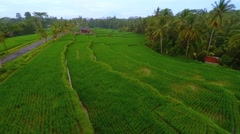Flight Over the Rice Field on Bali Island Stock Footage