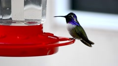 Hummingbird Eating and Feeding at a Red Backyard Hanging Feeder Stock Footage