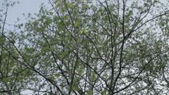 Tree Crown RotationTree Crown Rotation - stock footage