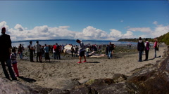 Time Lapse at Whale Stranding Stock Footage
