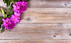Seasonal wild rhododendron flowers on rustic wooden boards - stock photo