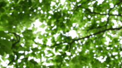 Green fresh tree leaves Stock Footage