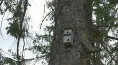 Fir Tree Bird Box Stock Footage