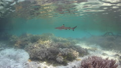 Juvenile Shark in Mangrove Forest - stock footage