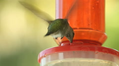 Male Hummingbird From Behind Slow Motion Stock Footage