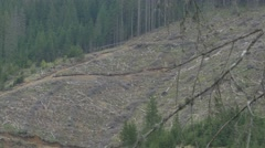 Forest Clearcut Logging Area Stock Footage