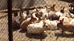 Rabbit in a cage eating Stock Footage