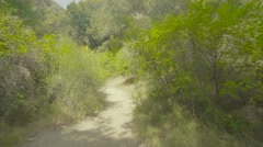 4k UHD Gliding through a forest trail - fast. Stock Footage