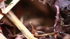 Earthworm in soil - closeup shot Stock Footage