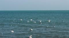 Swans on sea waves Stock Footage