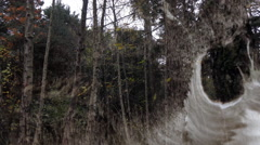 Travelling through the dark forest - scary ambiance with ink effects Stock Footage