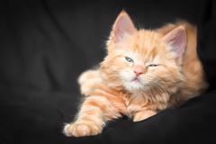 ginger kitten - stock photo