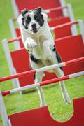 Agility Stock Photos
