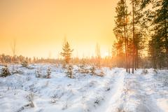 Sunset Sunrise In Sunny Winter Snowy Forest. Sun Shine Over Wint Stock Photos