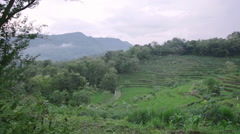 Pan shot of Ricefield, Yogyakarta, Indonesia - stock footage