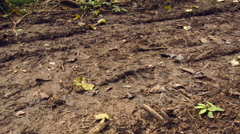 New road bulldozed through primary rainforest in Ecuador. - stock footage