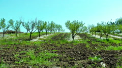 Field of Apple Trees in a sunny day - stock footage